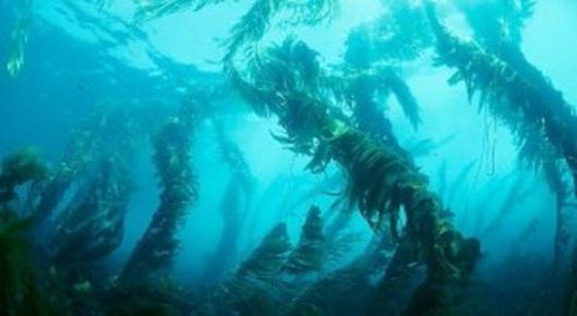 A Seaweed Web