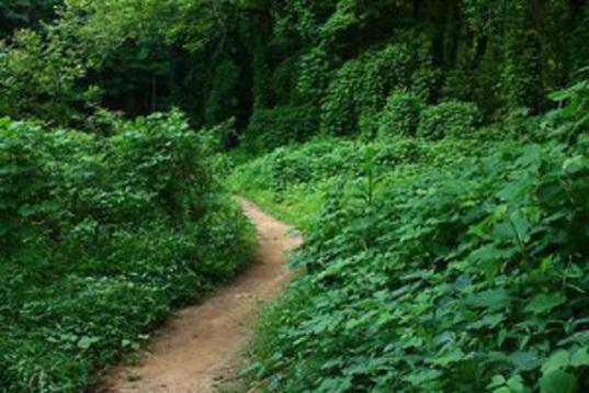 The Faint Road