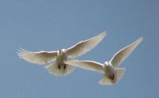 two-doves-e1335409431602